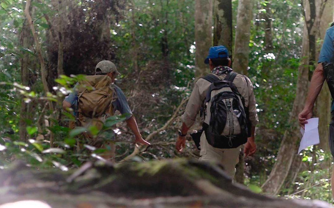 Trekking El Mirador